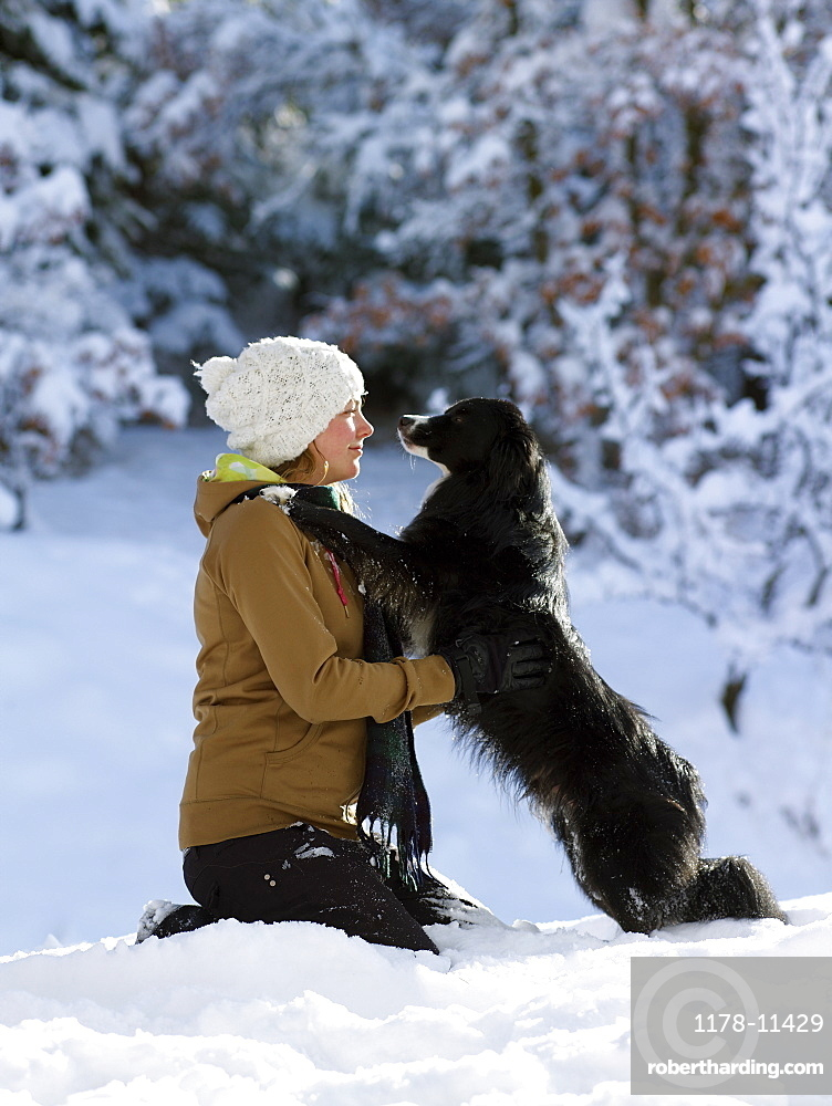 USA, Colorado, young woman playing with dog in snow
