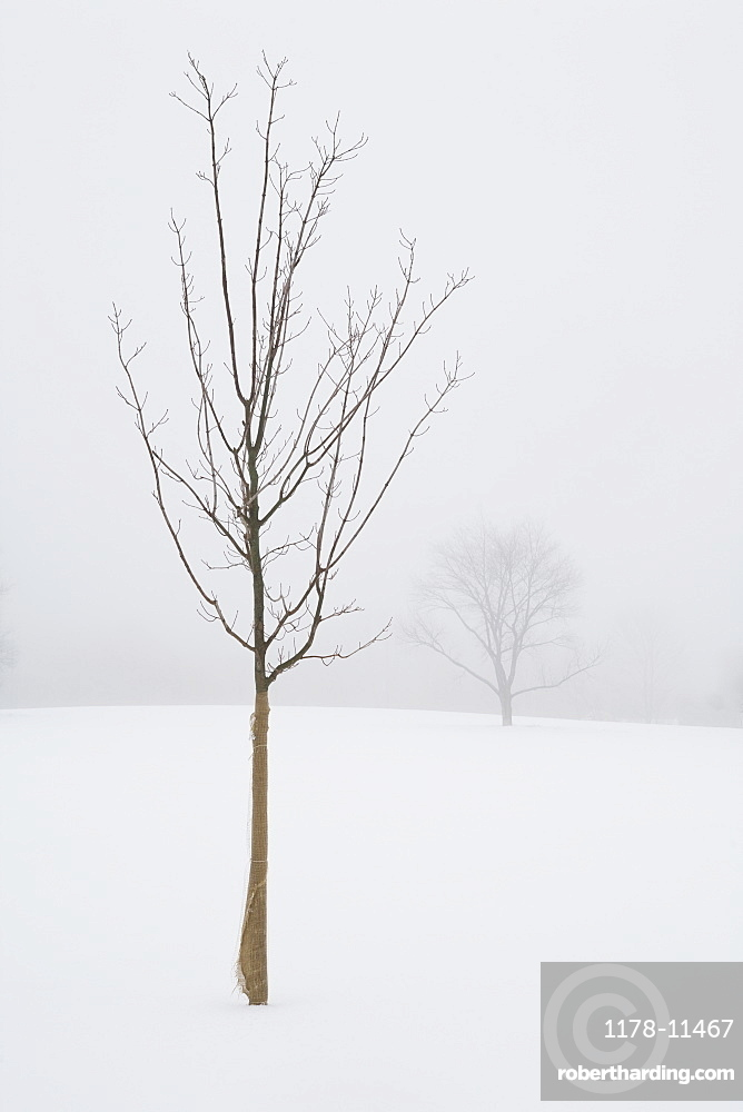 USA, New Jersey, Lonely tree in winter scenery