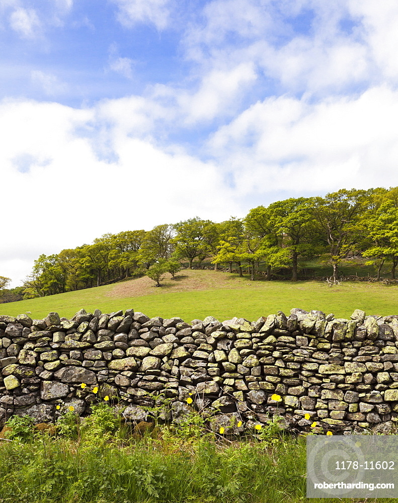 Dry stone wall and field