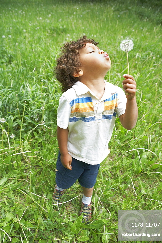 Young child blowing dandelion seed head