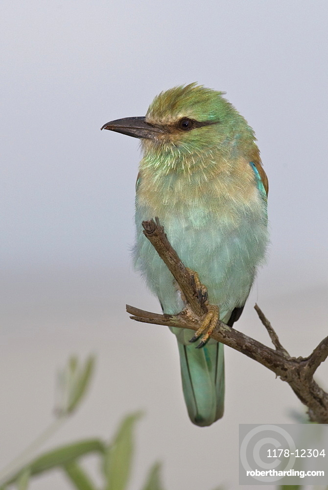 Small bird perched on branch
