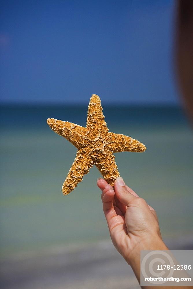 Child holding starfish, Florida, United States