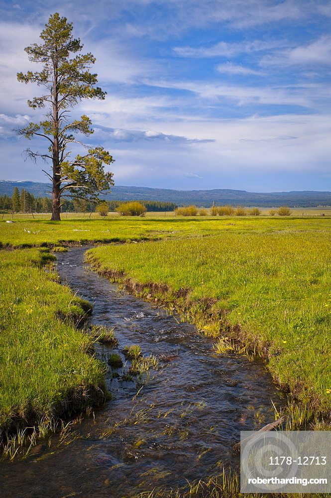 USA, Oregon, Scenic view of stream going through meadow