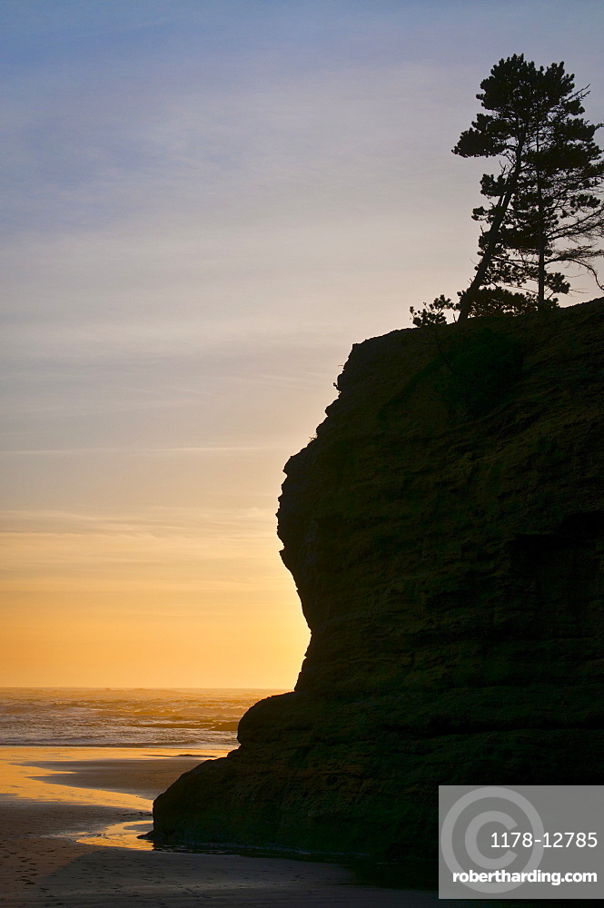 Pine tree on top of cliff at sunset