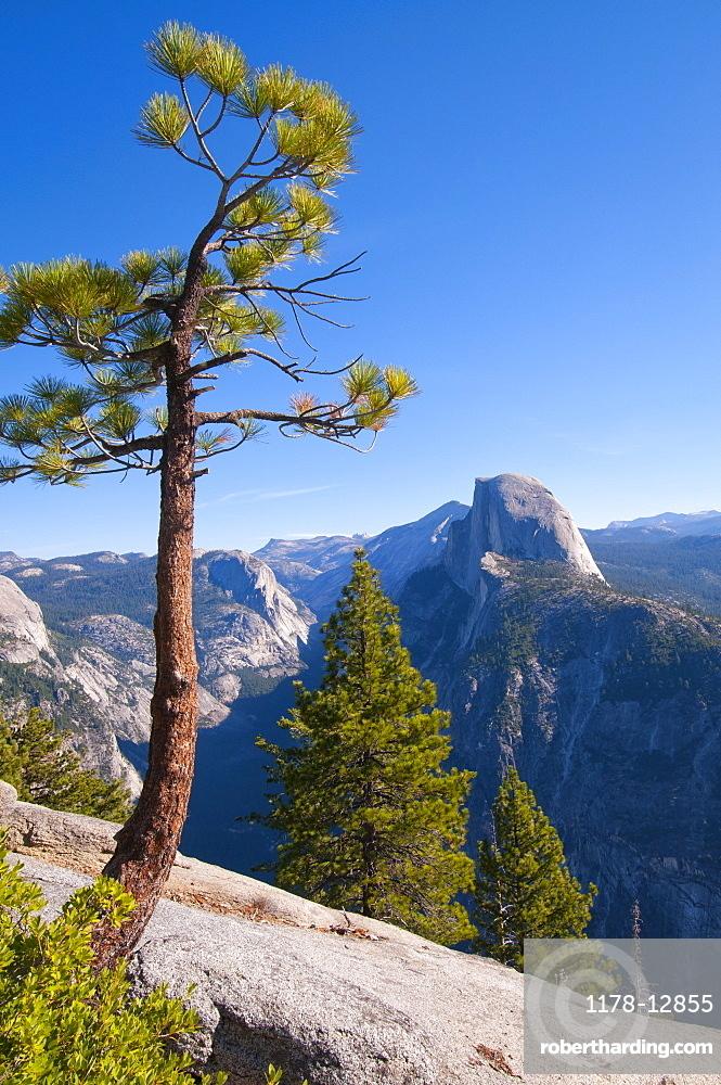 USA, California, pine trees in Yosemite Valley