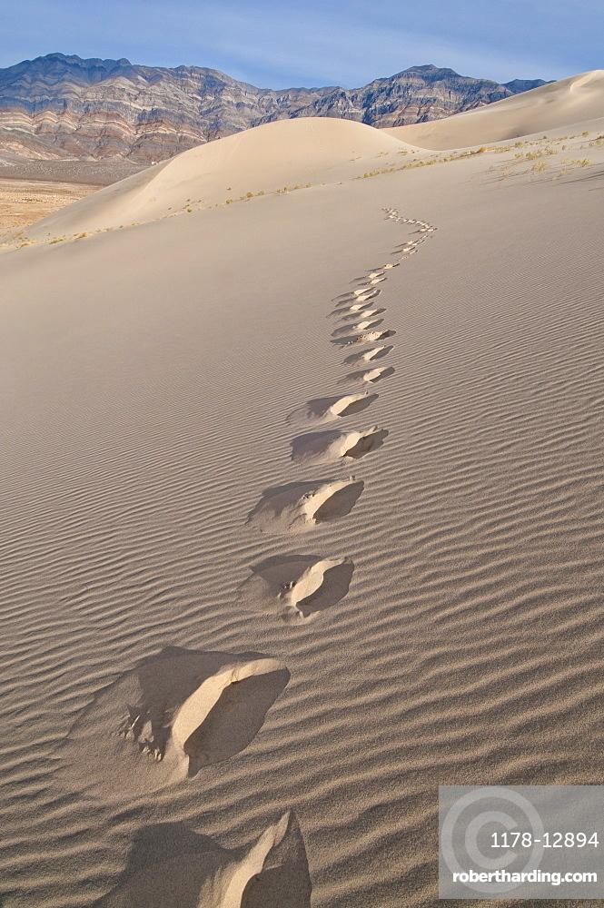 USA, California, Footprints of desert dune