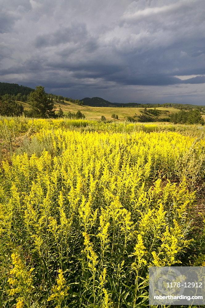 USA, South Dakota, Flowers and storm