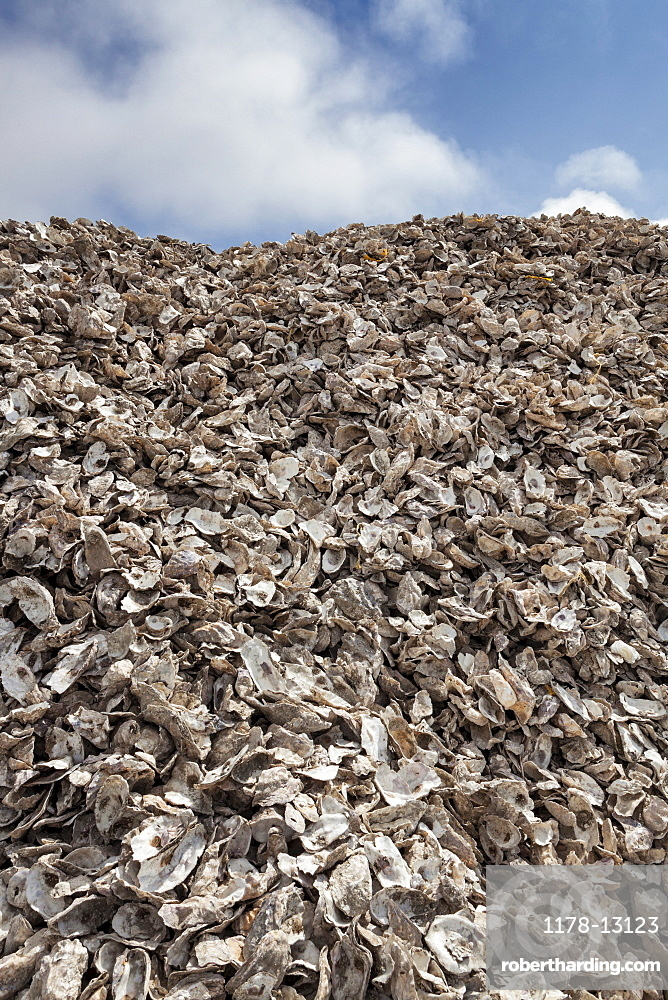 Pile of empty oyster shells, Charleston, OR