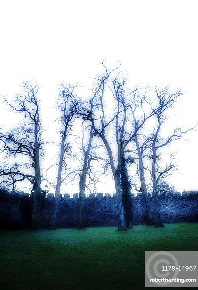 United Kingdom, Bristol, Trees by castle wall