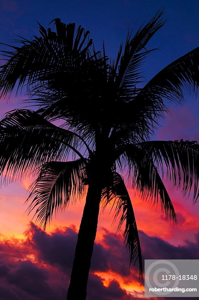 Aruba, silhouette of palm tree at sunset