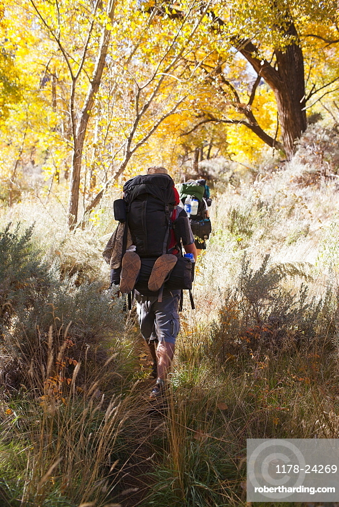 Two people hiking in forest, Grand Gulch, Utah, USA
