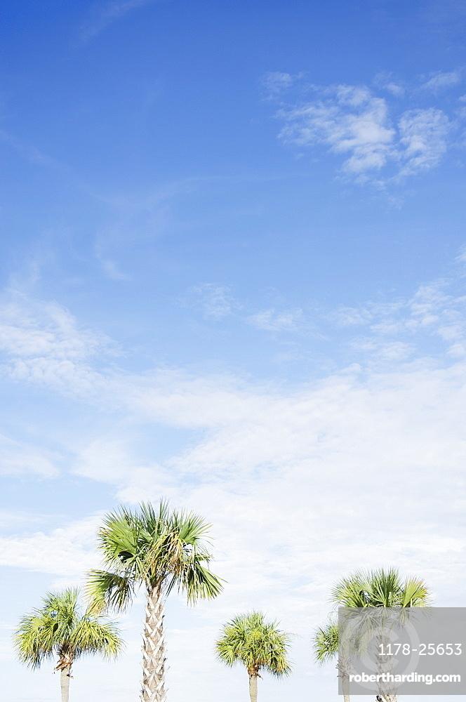 South Carolina, Palm trees against sky