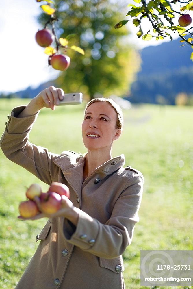 Austria, Salzburger Land, Maria Alm, Mature woman photographing apples on tree