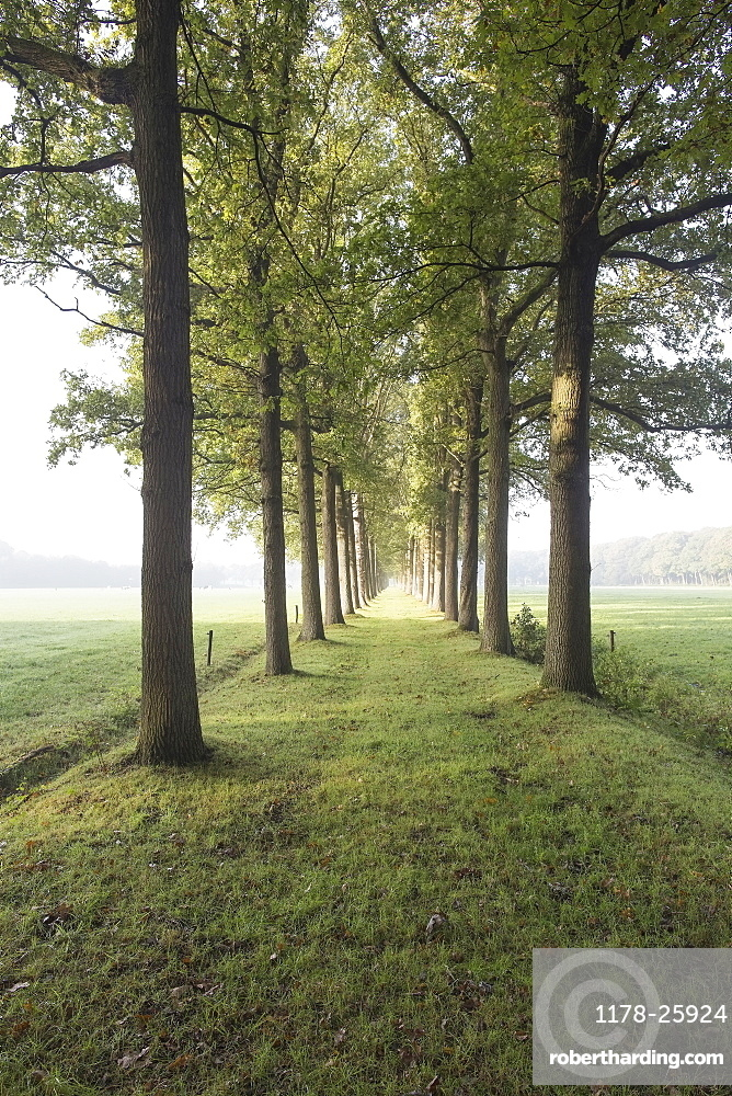 Netherlands, Green path with trees