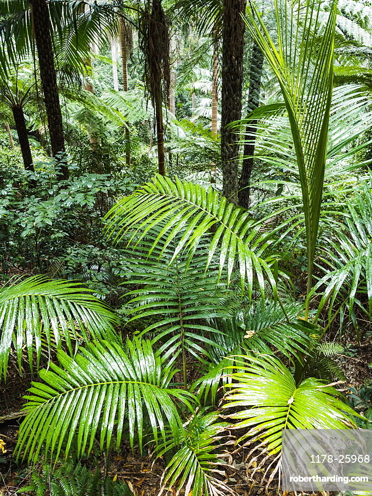 Australia, New South Wales, Port Macquarie, Lush plants in forest