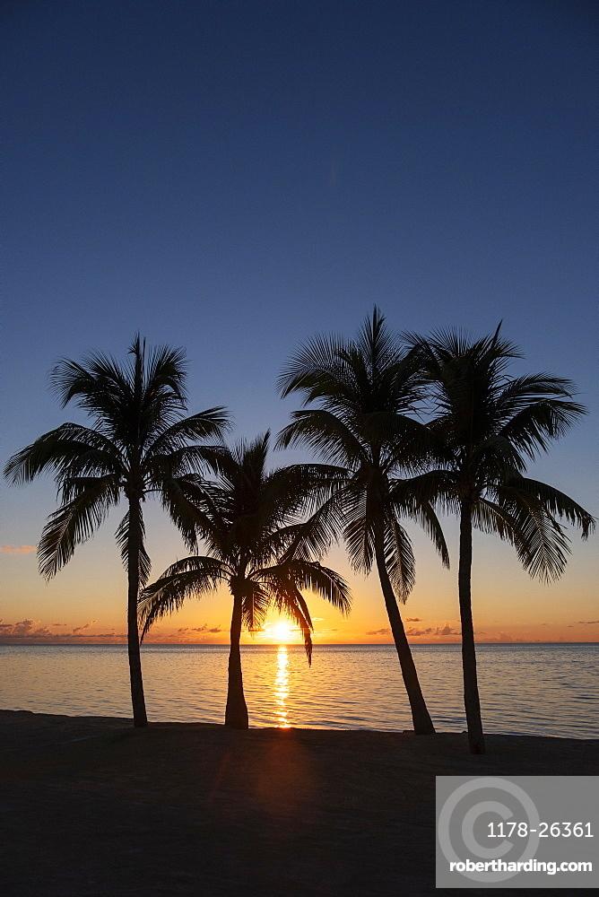 Silhouette of palm trees at sunset, Islamarada, Florida, Keys