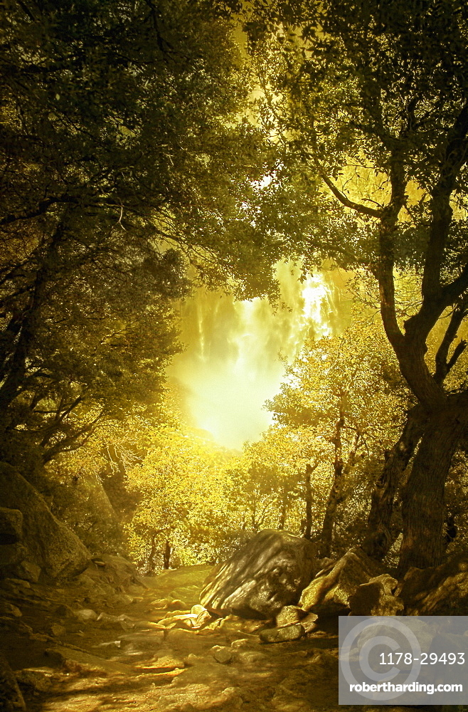 United Kingdom, England, Bright sunlight in autumn forest