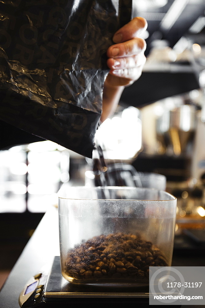 Coffee shop barista pouring coffee beans, close-up