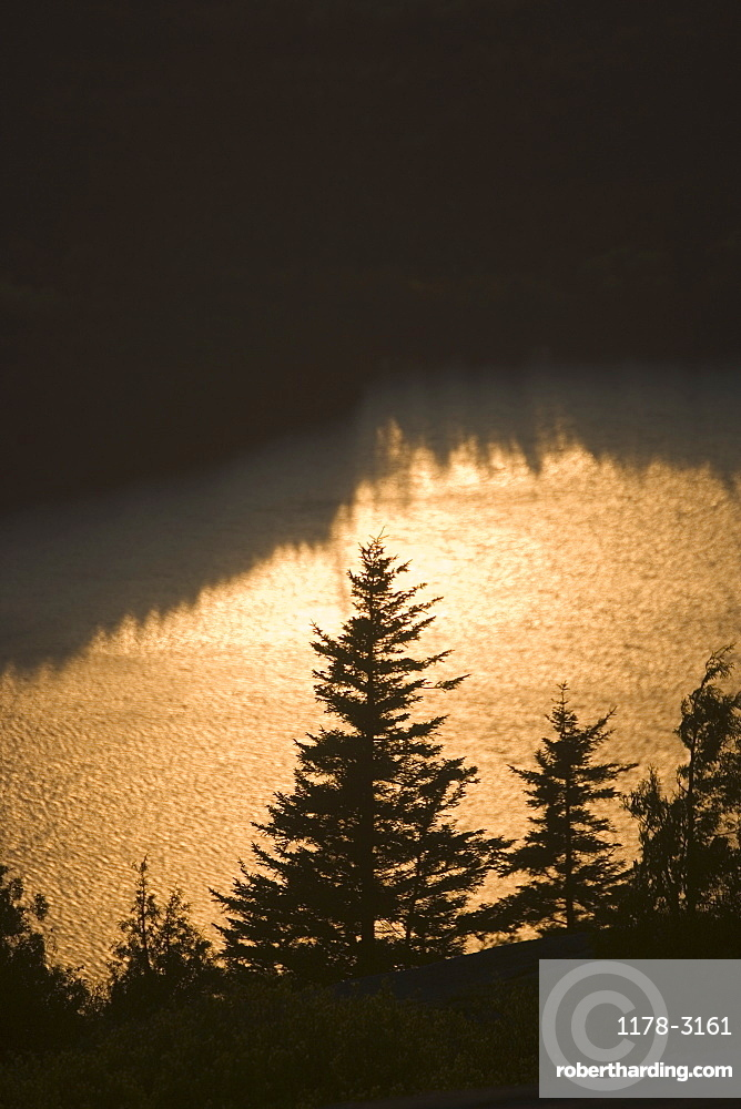 Trees at sunset from Cadillac Mountain in Maine