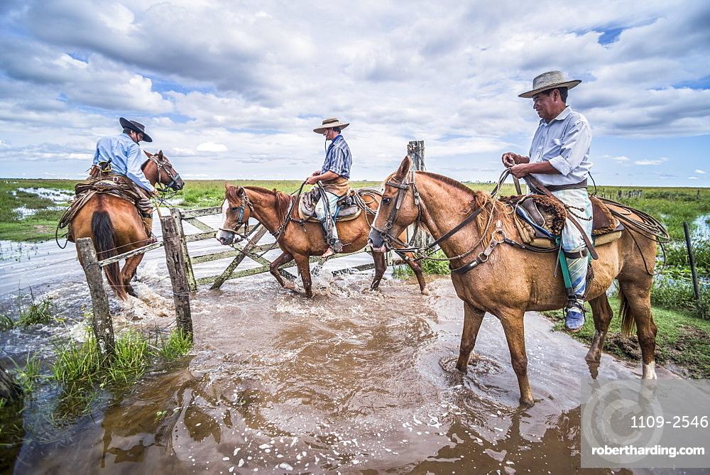 Gauchos on a traditional Argentinian cattle farm, Estancia San Juan de Poriahu, Ibera Wetlands, Corrientes Province, Argentina, South America