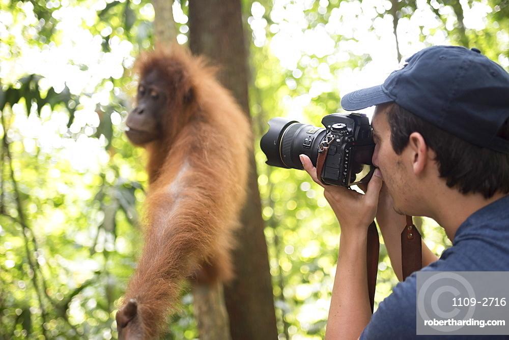 Photographer taking a photo of an Orangutan in the jungle of Gunung Leuser National Park, Bukit Lawang, North Sumatra, Indonesia, Southeast Asia, Asia