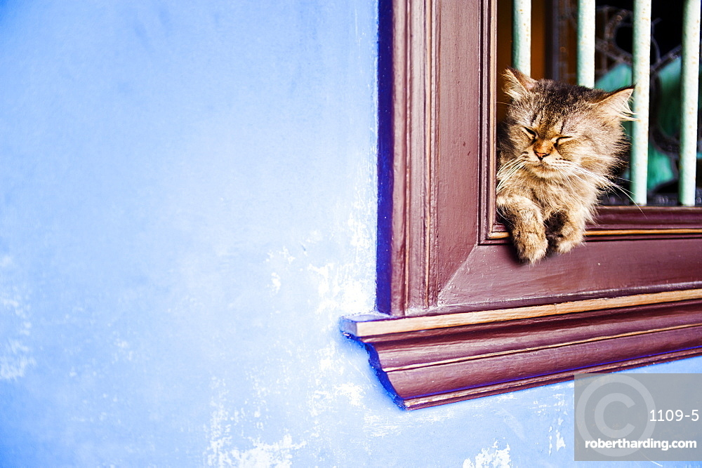 Cat at Cheong Fatt Tze Mansion, Georgetown, Penang, Malaysia, Southeast Asia, Asia