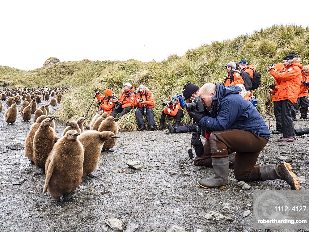 Tourists photographing king penguin chicks at Salisbury Plain, South Georgia Island, Antarctica