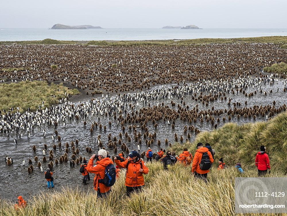 King penguin chicks and bird watching tourists on Salisbury Plain, South Georgia Island, Antarctica