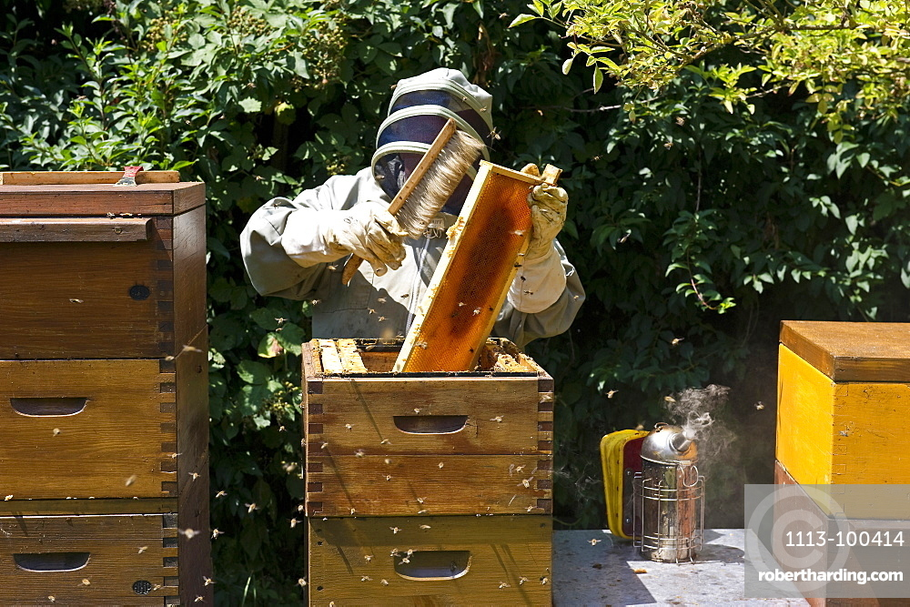 Beekeeper with smoker at wooden beehives, Freiburg im Breisgau, Black Forest, Baden-Wuerttemberg, Germany