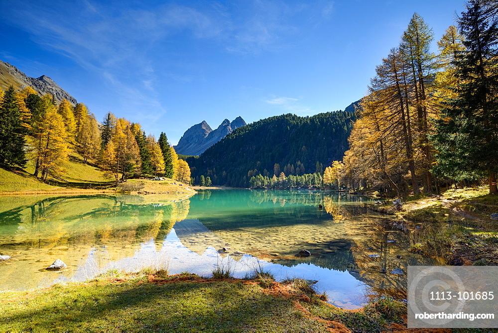 Golden larches at lake Palpuogna (1918 m) with Piz da la Blais (2930 m), Grisons, Switzerland