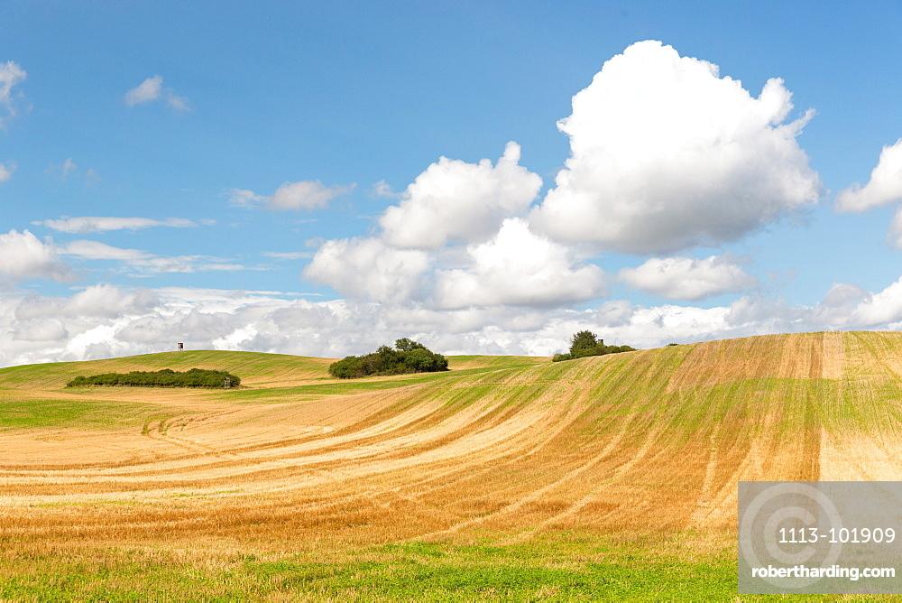Scenery with fields in summer, Schorfheide-Chorin Biosphere Reserve, Uckermark, Brandenburg, Germany