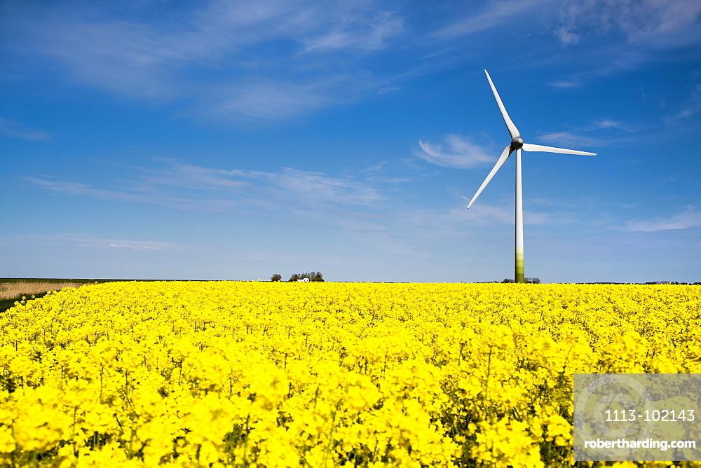 Wind turbine and rape field, Nordstrand Island, North Frisian Islands, Schleswig-Holstein, Germany