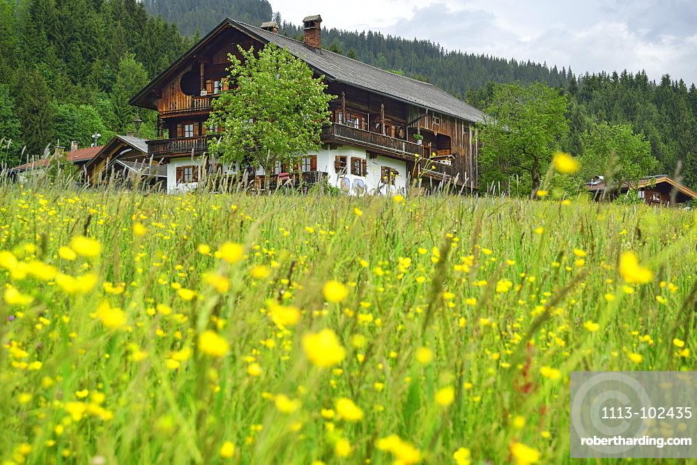 View over a flower meadow to an alpine farmhouse, Penningberg, Hopfgarten im Brixental, Kitzbuehel Alps, Tyrol, Austria