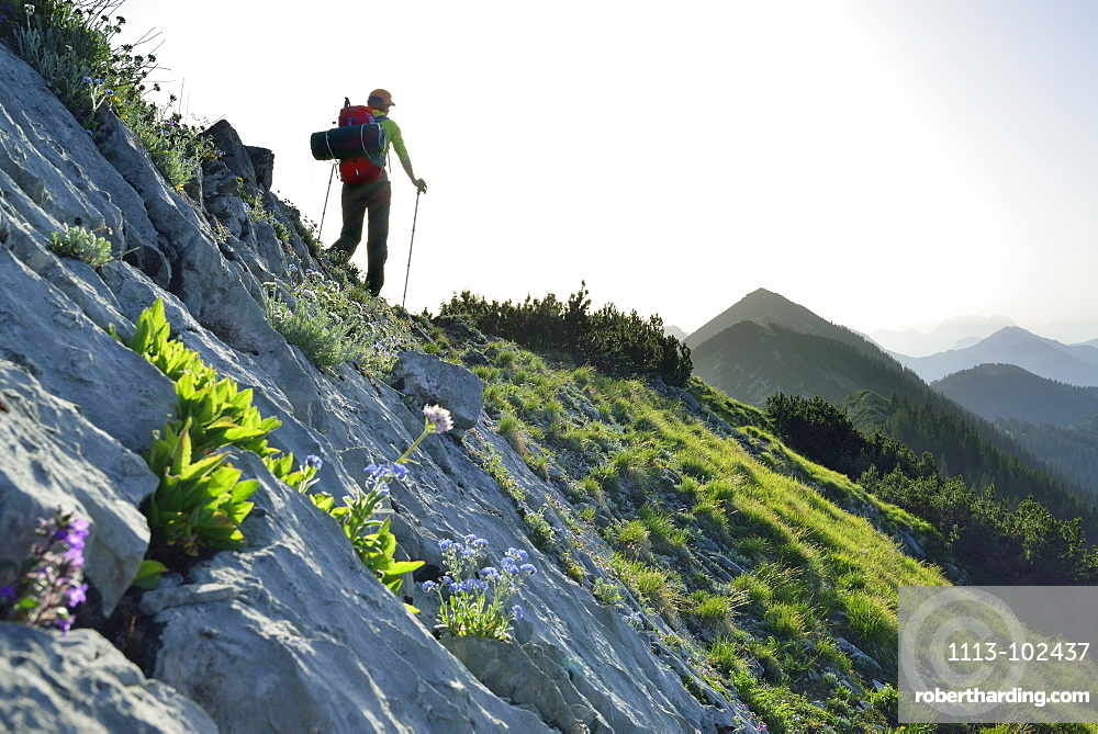 Woman hiking along a ridge, Blauberge, Bavarian Prealps, Upper Bavaria, Bavaria, Germany