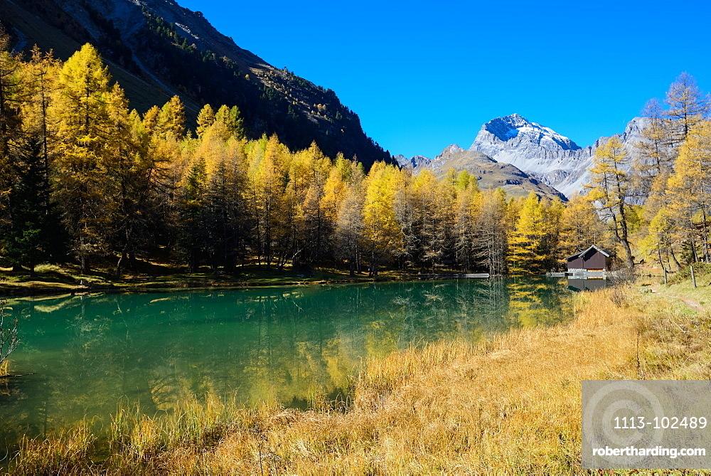 Golden larches at lake Palpuogna (1918 m) with Piz Ela (3180 m), Grisons, Switzerland