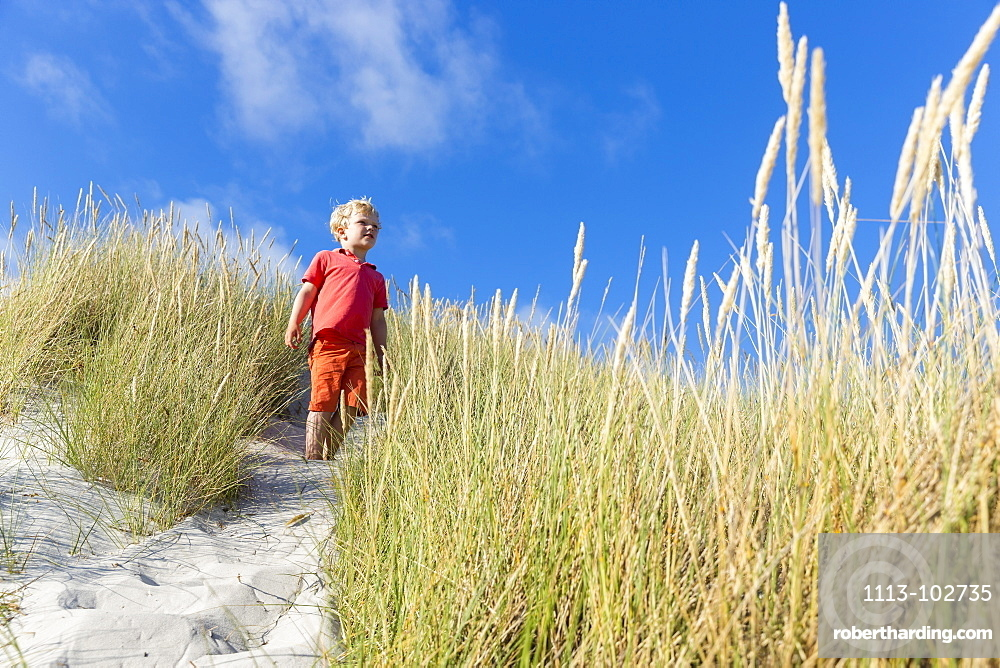 Boy in the dunes at Dueodde, sandy beach, Summer, Baltic sea, Bornholm, Dueodde, Denmark, Europe