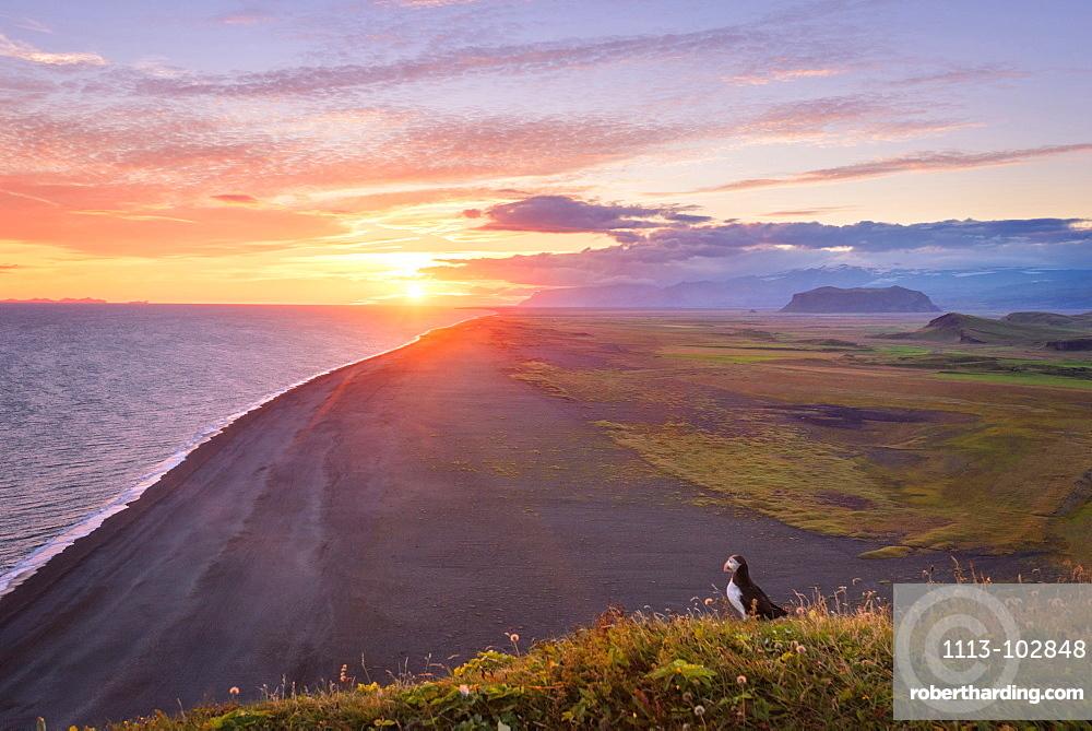 Sun, Sunset, Beach, Puffin, Klifandi, Dyrholaey, Iceland, Europe