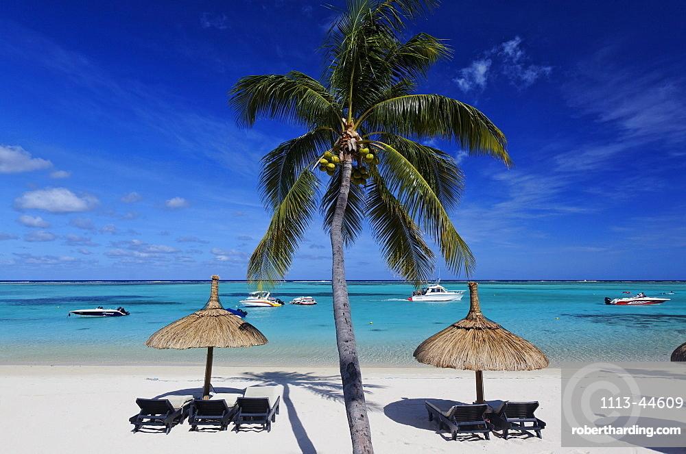 Palm tree on the beach of Beachcomber Hotel Paradis & Golf Club, Mauritius, Africa