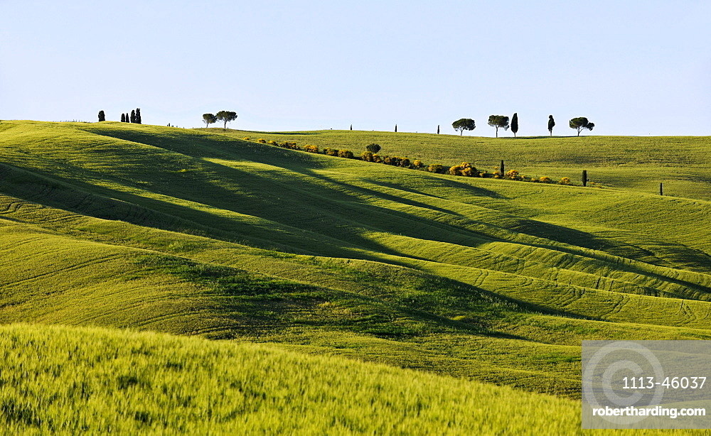 Green fields in the sunlight, Crete, Tuscany, Italy, Europe