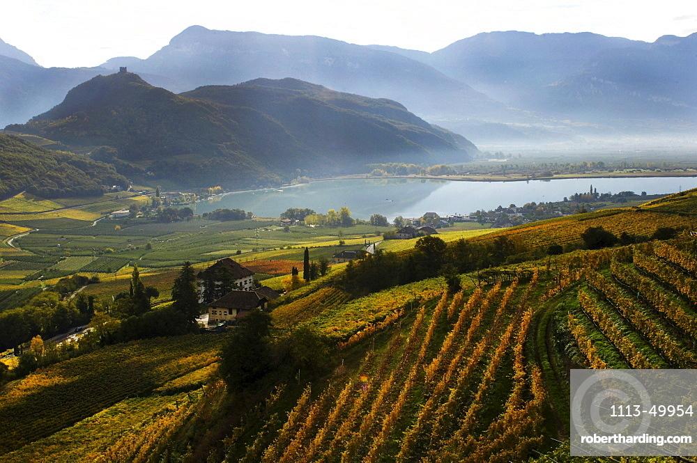 High angle view of vineyard at lake Kalterer See, Kaltern an der Weinstrasse, South Tyrol, Alto Adige, Italy, Europe