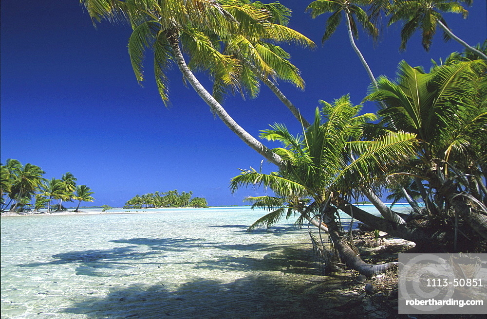 Coconut palm trees on Motu island under blue sky, Tuamotu, French Polynesia, South Pacific, Oceania