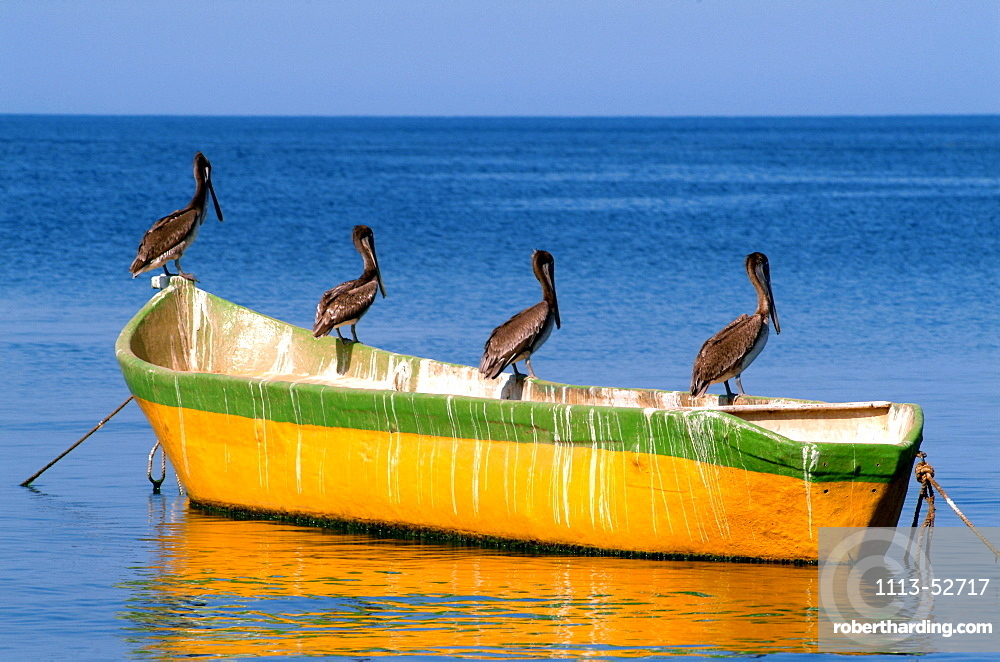 Pelicans sitting on a boat in the sunlight, Taganga, Santa Marta, Colombia, South America