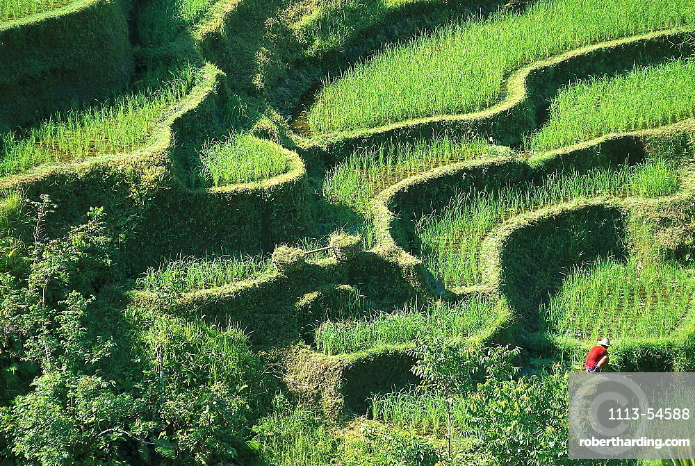 Peasant farmer working on his rice fields, Rice terraces near Pujungklod, Bali, Indonesia