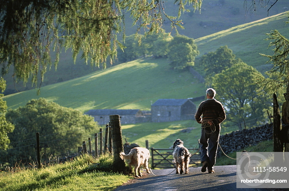 Man with dogs, Lake District, Cumbria, England, United Kingdom