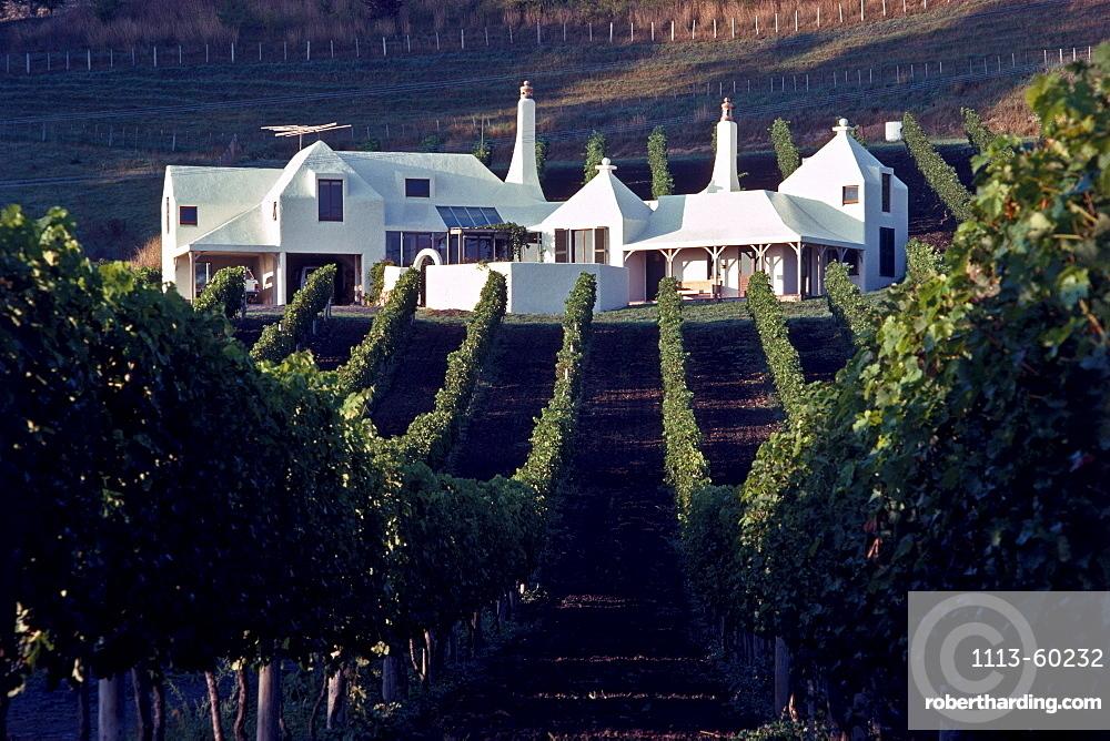Vineyard and Te Mata winery Havelock North in the sunlight, Hawkes Bay, North Island, New Zealand, Oceania