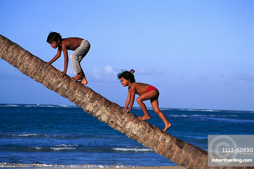 Kids climbing on a palm, Dominican Republic, Caribbean