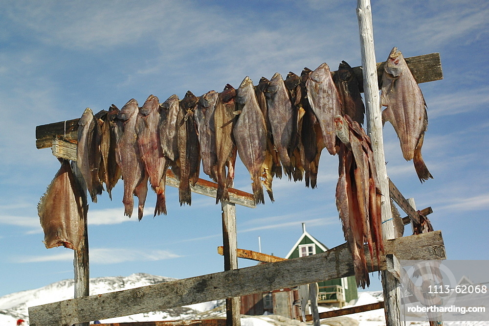 Dried fish, Fish hung up for drying, Ilimanaq, Klaushavn, Kaalalit Nunaat, Greenland