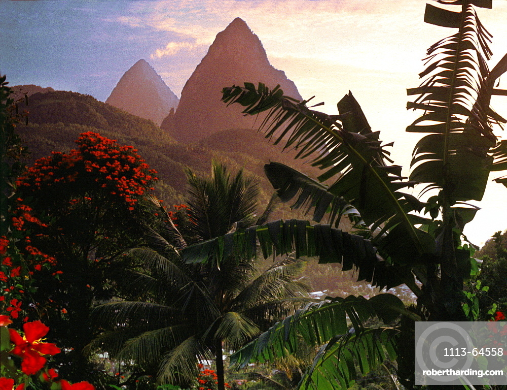 Palm trees and the mountains Two Pitons at sunset, Soufriere, St. Lucia, Carribean, North America