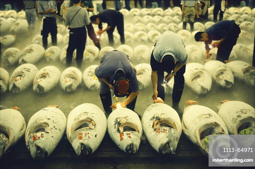 People and tunafish at Tsukiji fishmarket, Tokyo, Japan, Asia