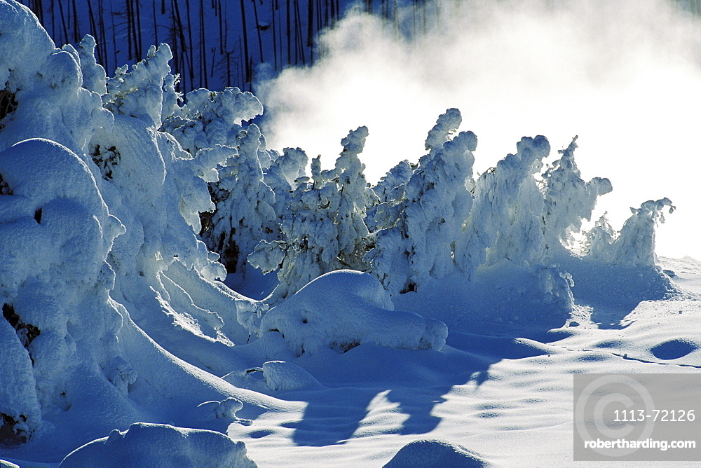 Snow covered spruce, Midway Geyser Basin, Yellowstone National Park, Wyoming, USA, America